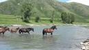 Жеребец Плеск и его лошади Первый жеребенок часть 4