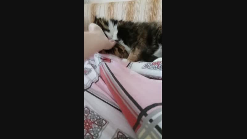 Ага, прям таки балдеют котики, когда им гладят подбородики.