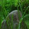 Камень в лесу