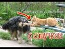 Приколы про котов с озвучой ДО СЛЁЗ – Смешные коты 2018 от Domi Show
