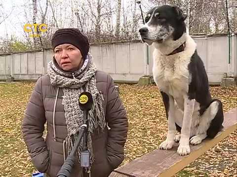 Надо же все собаки с зубами СТС МИР