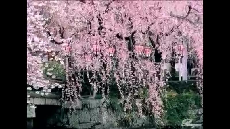 Японская сакура и поэзия хокку