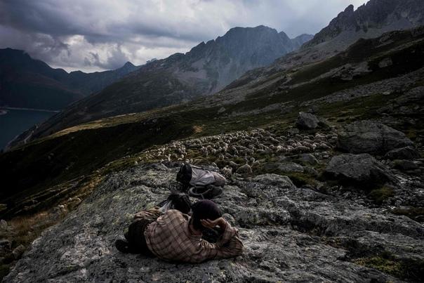 Работа мечты: как живёт пастух в Альпах Гаэтан Меме завершил свой третий сезонный перегон скота на богатые альпийские пастбища и даже представить себе не может лучшей жизни. 24-летний пастух с