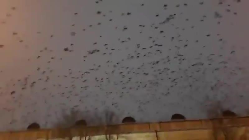 Всюду знаки. Там, где Порошенко автокефалию продвигает, вороны летают.