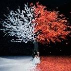 Aimer альбом Akane Sasu / Everlasting Snow - EP