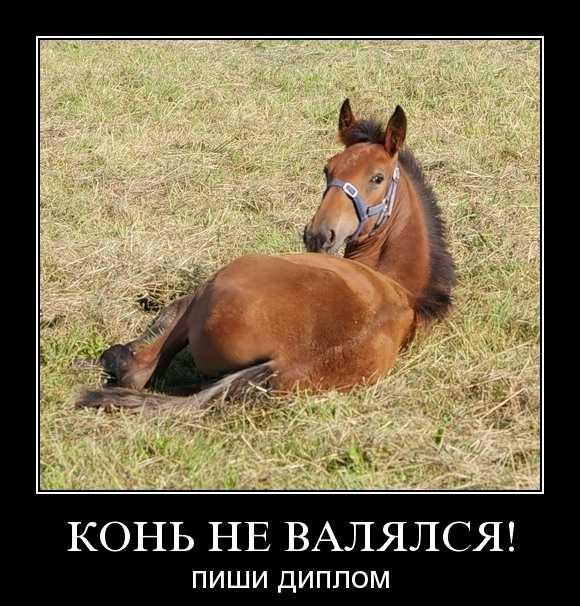 И конь не валялся