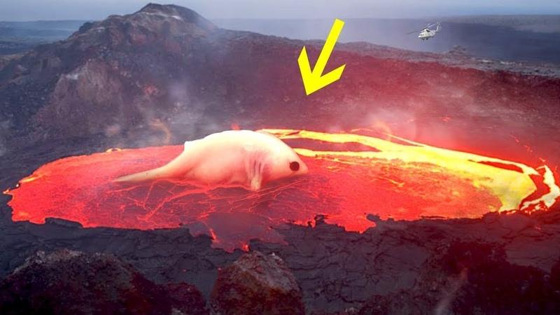 Wer wohnt in den Tiefen eines Vulkans
