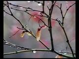 Lake of Tears - So Fell Autumn Rain
