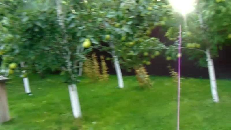 Прогулки Чернобаева с Железовым в дочернем саду дублере