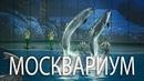 Москвариум на ВДНХ Водное шоу Сон в летнюю ночь эпизоды