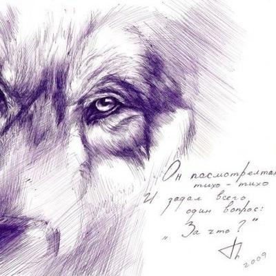 Сергей Сузи