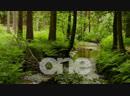 Onetv live stream Arabic Music Drama Comedy Live مباشر