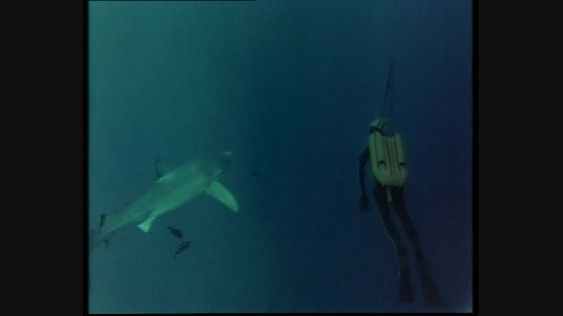 40-1 Акулы (Одиссея Жака Кусто HD 1991г)