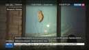 Новости на Россия 24 • В канадском Монреале забросали яйцами здание мечети