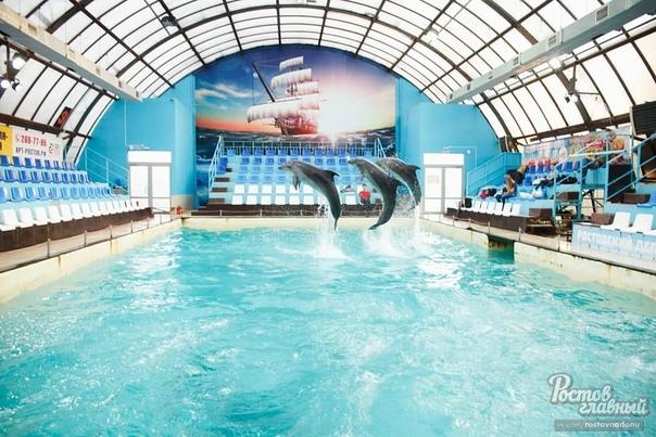 Дельфины в парке Сказка. Удивительные животные