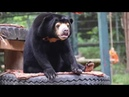 The tragic sign this sun bear orphan will always miss her mum