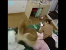Супер энергичная собака