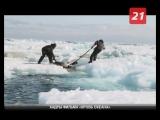 Норвежский фильм «Кровь океана» покажут в Никеле на фестивале «Северный Характер: Green Screen»