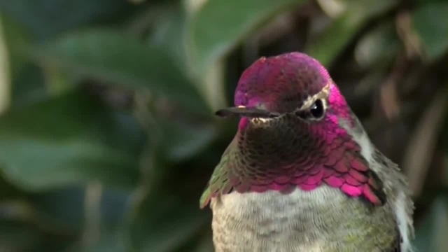 Колибри: цветокоррекция без Фотошопа | Hummingbird: color correction without Photoshop
