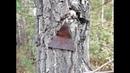 Неожиданные находки в каслинском лесу