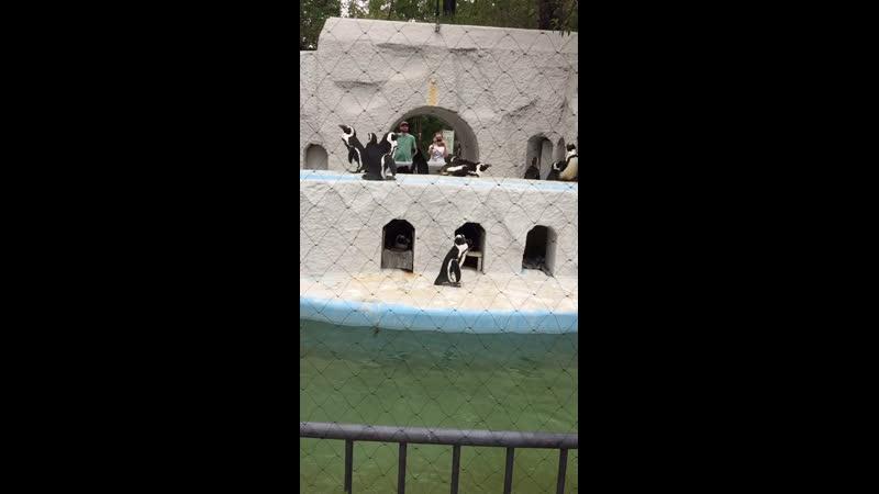 Зоопарк в Токио Пингвины