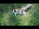 Кошечка радуется хозяйке