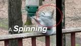Spinning 'forever' Squirrel caught twirling on bird feeder