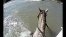 Перехожу горную реку на коне