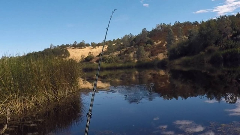 Whopper Plopper Madness at Coit Lake in Henry Coe State Park