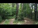 Качалка в лесу Workout 💪🥇🏆и песни под гитару 🎸