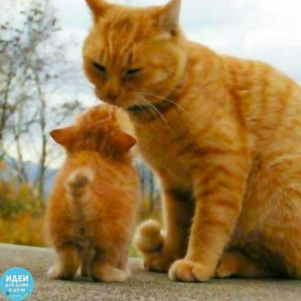 Мамино Солнышко! Кто любит котиков