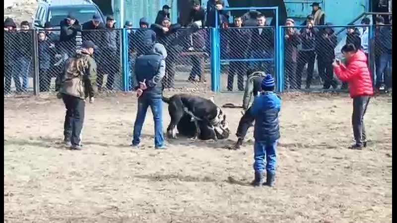 Барон Шымкент победа vsДауыл Талғар