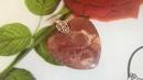 Кулон Ископаемый коралл/Натуральный камень(продается)