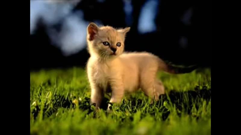 Flёur - Тёплые коты.
