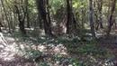 6 Дикий Самурский лес у дороги в поселок Приморский Приморск, сентябрь 2018 Южный Дагестан