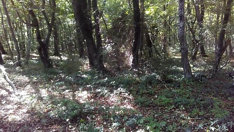 6 Дикий Самурский лес у дороги в поселок Приморский (Приморск), сентябрь 2018 | Южный Дагестан