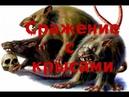 Сражение с крысами Отрывок из книги Антисвинизм или необычайная история одного восстания