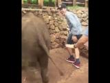 Слонёнок, не желая участвовать в фотосессии, дал пинка назойливому туристу