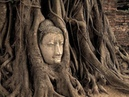 Что говорят деревья о человеке Ученые оцепенели после того как прибор перевел язык деревьев