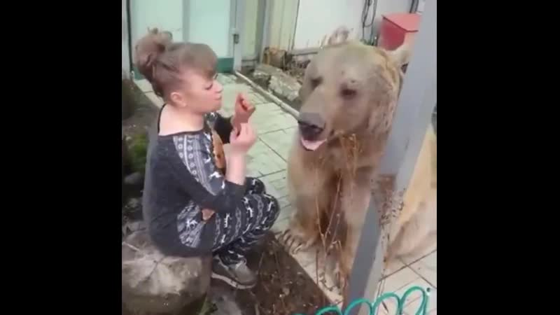 Вот они не наигранные чувства Животные в отличии от людей никогда не лицемерят и не врут