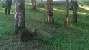 Медвежата , бурый и гималайский э