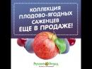Коллекция плодово-ягодных саженцев еще в продаже!