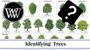 How to Identify a Tree By Leaf Bark and Fruit Wood and Lumber Identification for Woodworking