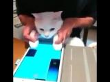 Котя играет | Mews News | Котоновости