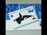 Поющие открытки с морскими млекопитающими