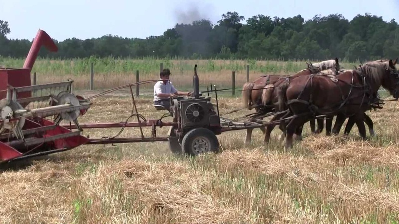 Amish Harvest in Holms County Ohio