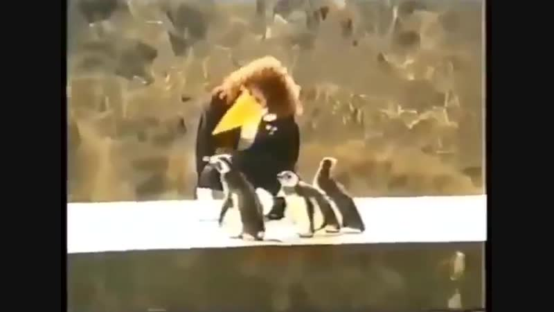 Brian May losing his self awareness to become a penguin 1991