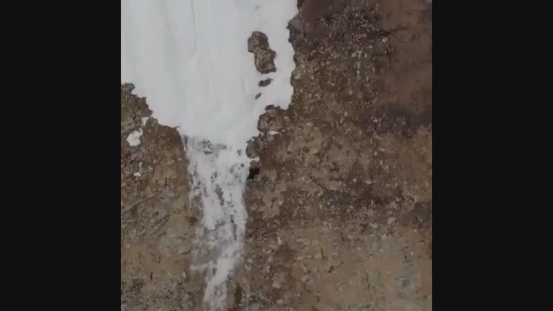 Медведица с медвежонком взбираются напр отвесной скале