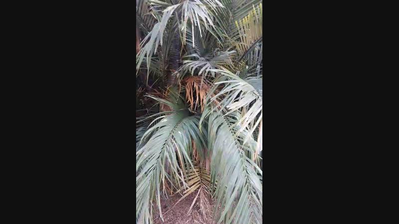 Ботанический сад. Тенерифе