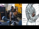 8 Ejercicios para Biceps Diferentes 8 Exercises for Different Biceps